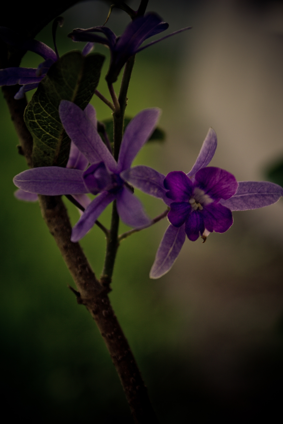 Her Love Will Always Be The Color Purple