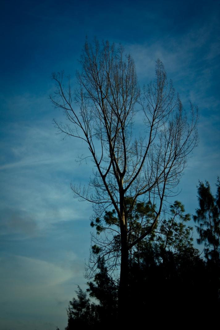 A Tree On A Pretty Sky