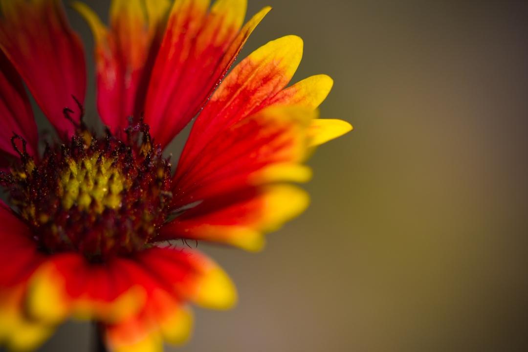 FloralFriday-03292013