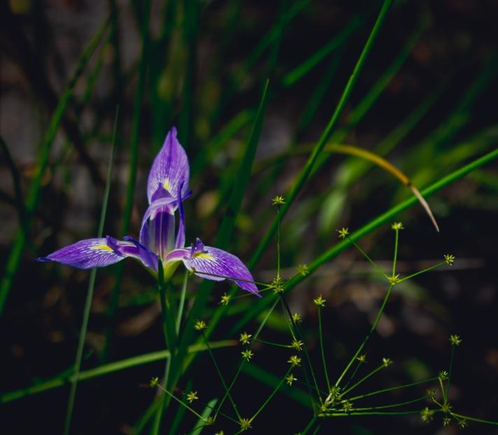 floralfriday1-03082013