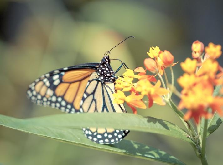 butterflyl-06172013