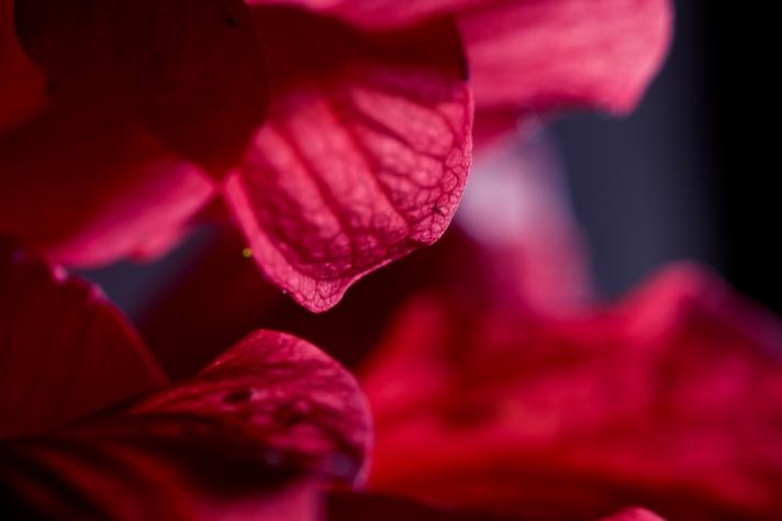 FloralFriday-05312013