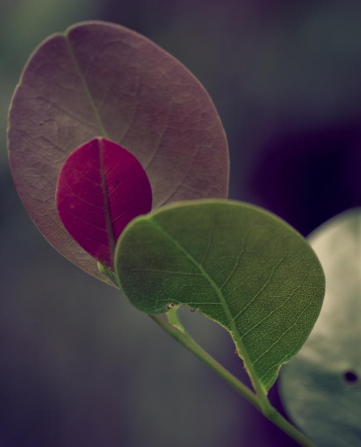 leavesonThursday-06202013