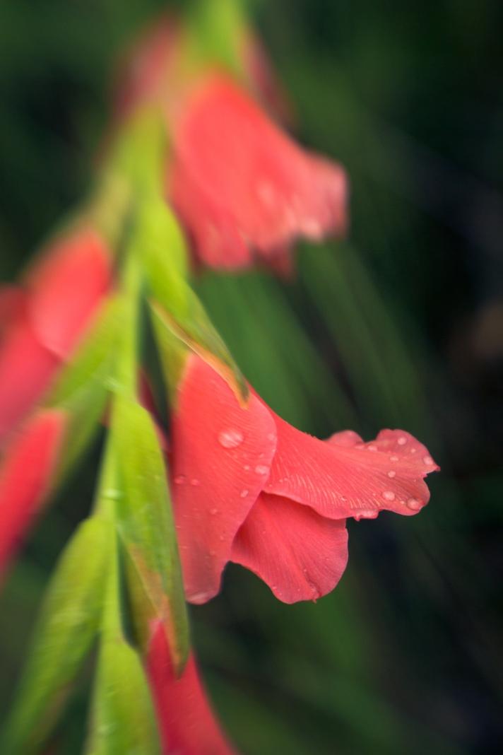 FloralFriday-07122013