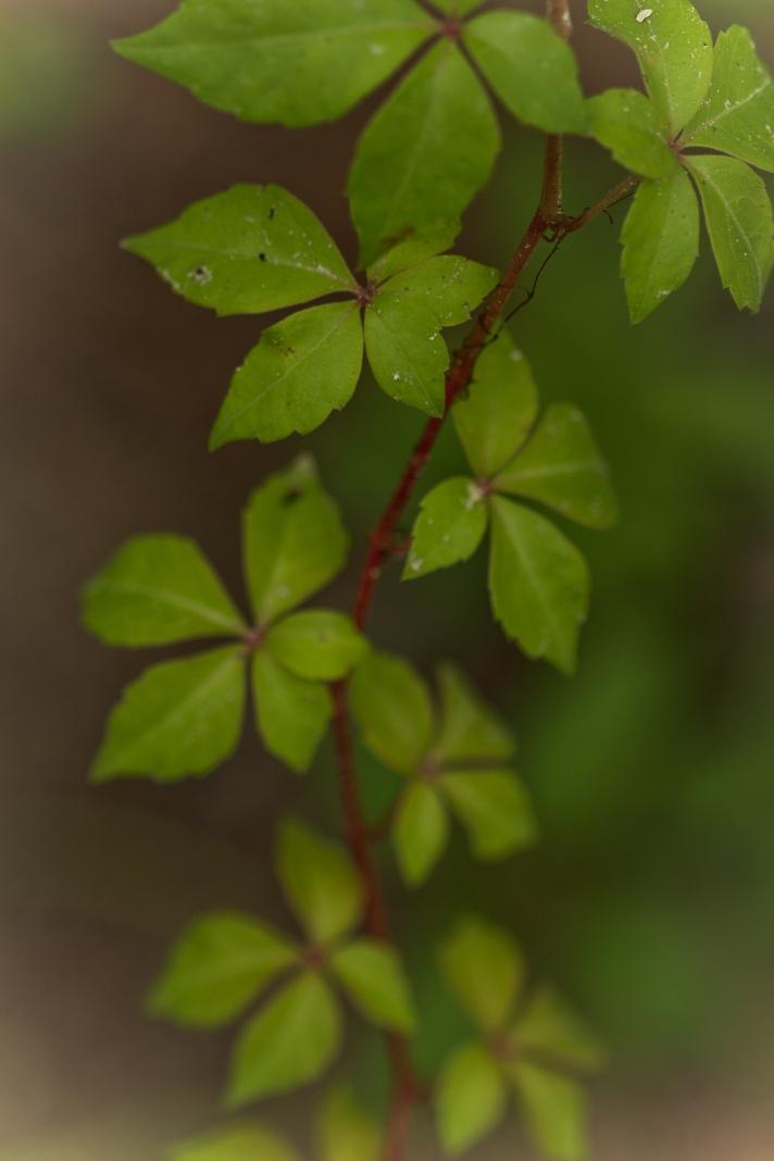 leavesonthursdayy-06272013