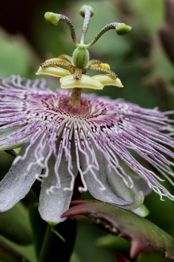 redwhiteandsnap2-floralfriday-07052013