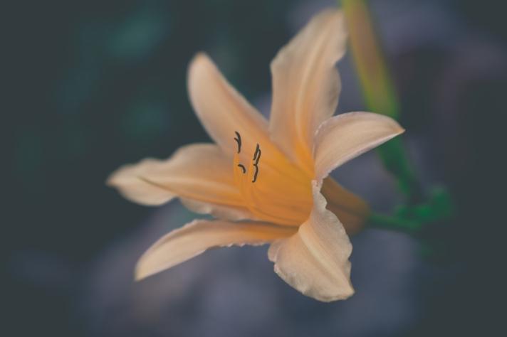 FloralFriday-07192013