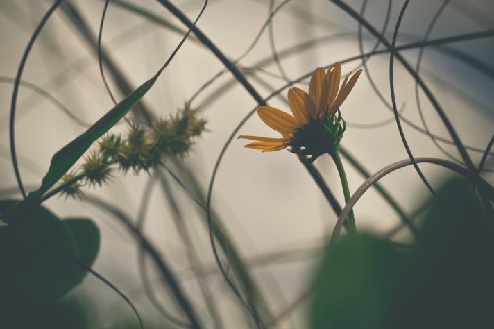 FloralFriday-08092013