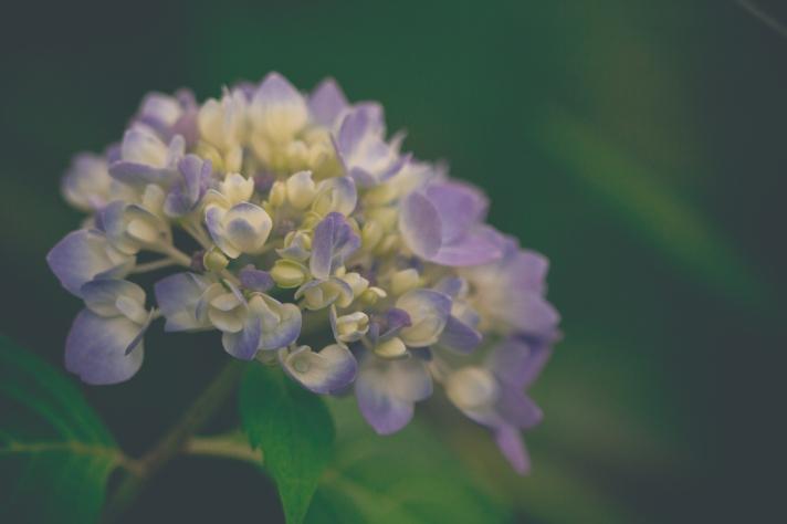 floralfridayday-08022013