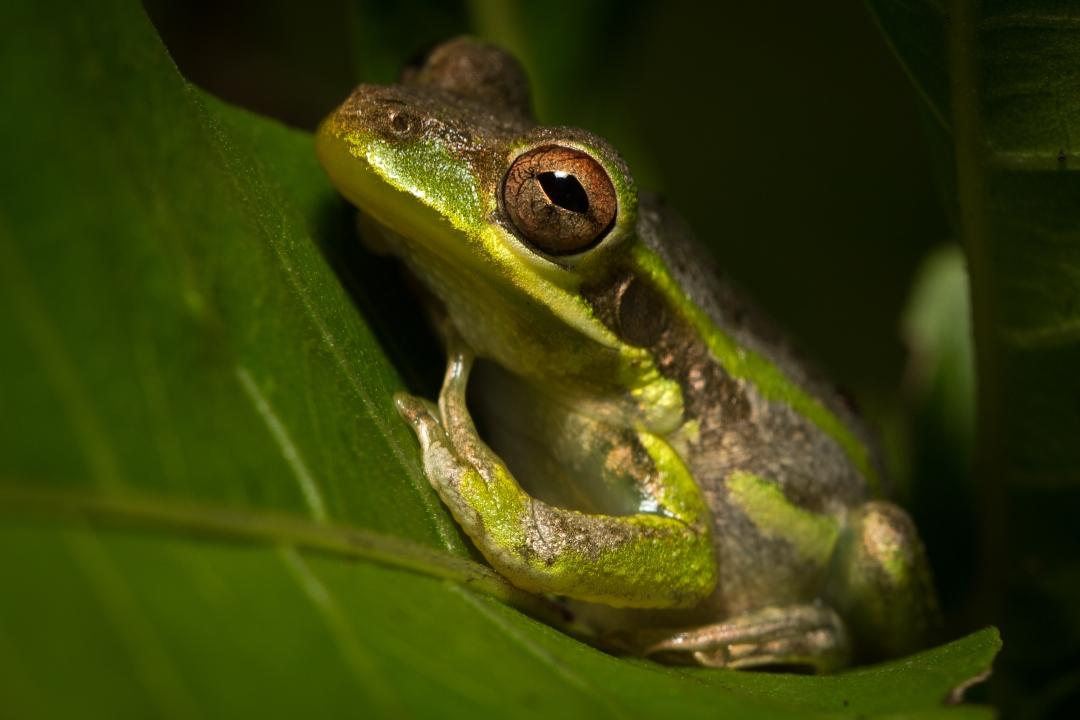 froggy-08292013