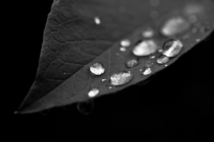 leavesonthursday-07252013