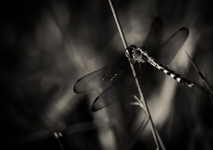 dragonflylove4-08312013