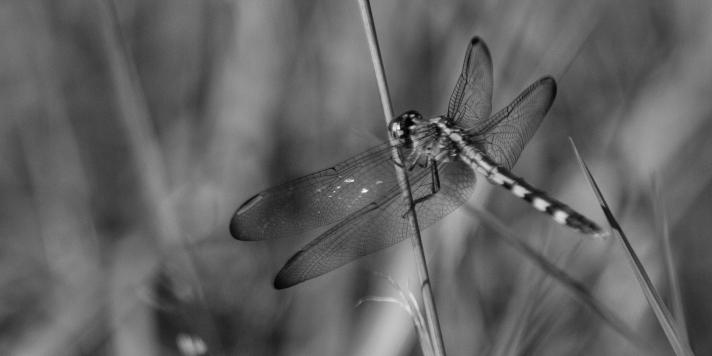 dragonflylove5-08312013