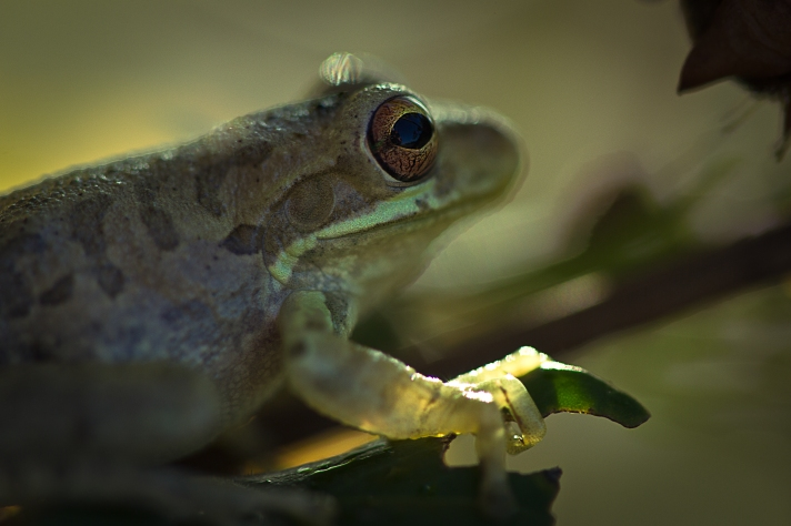 Frogseyeview-09292013