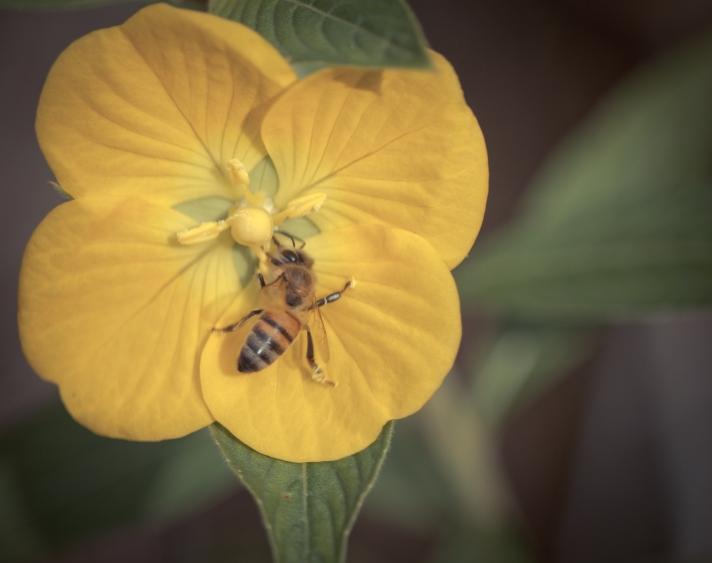 buggypollinator-10252013