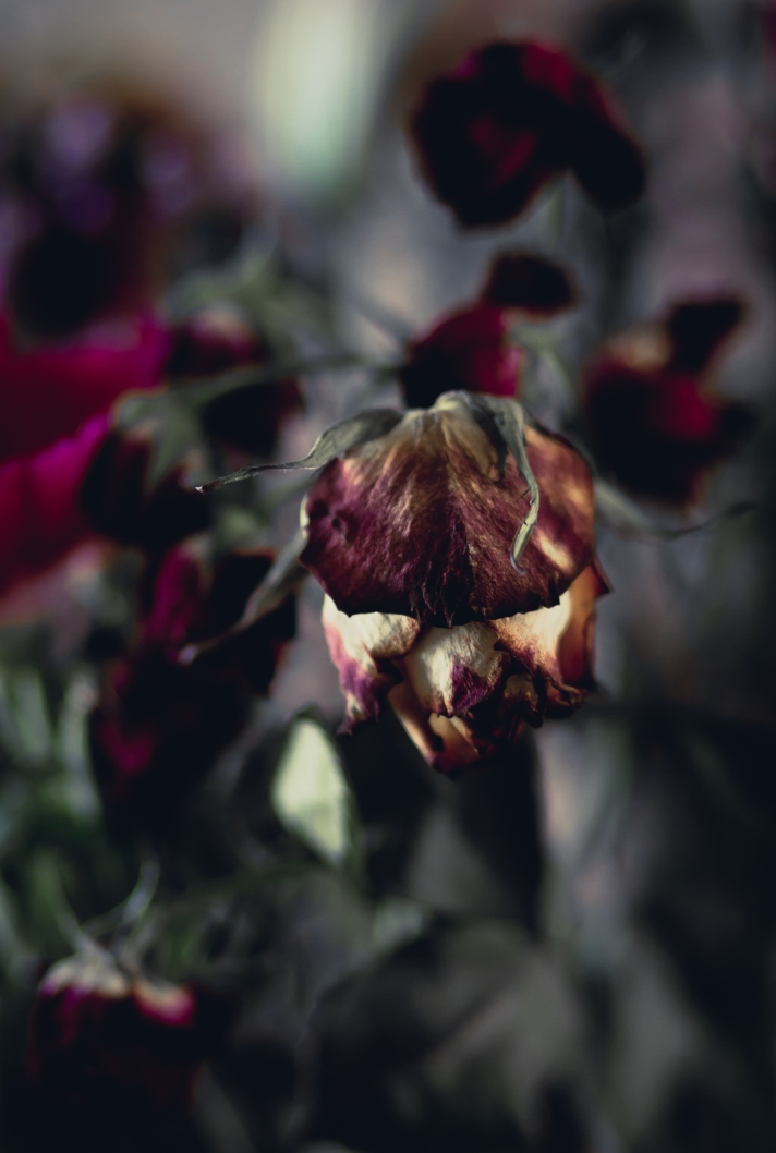 FloralFriday-10112013