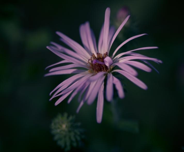 FloralFriday-10252013