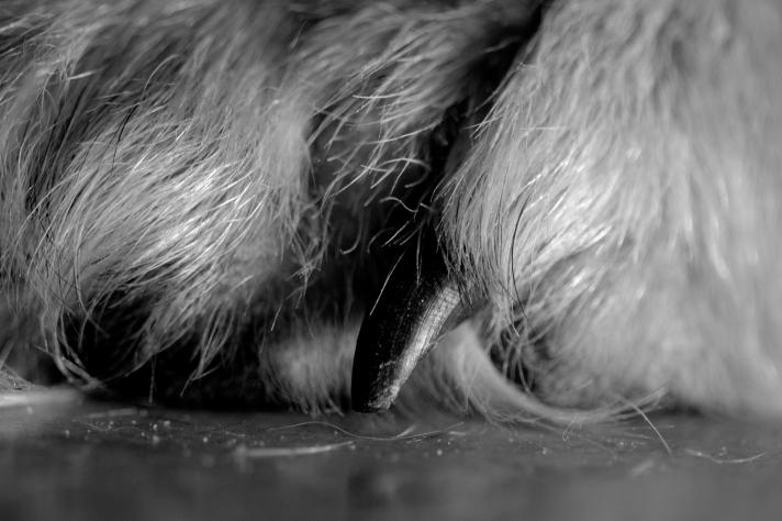 MacroMonday-Furry-09302013