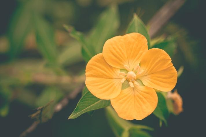 FloralFriday-11012013