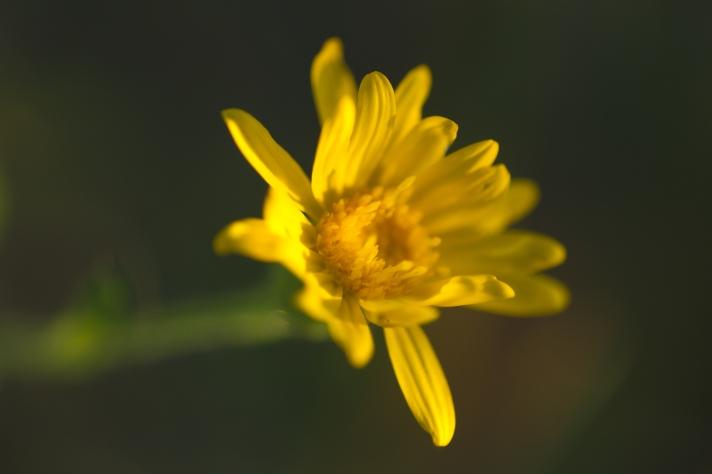 floralfriday-11152013