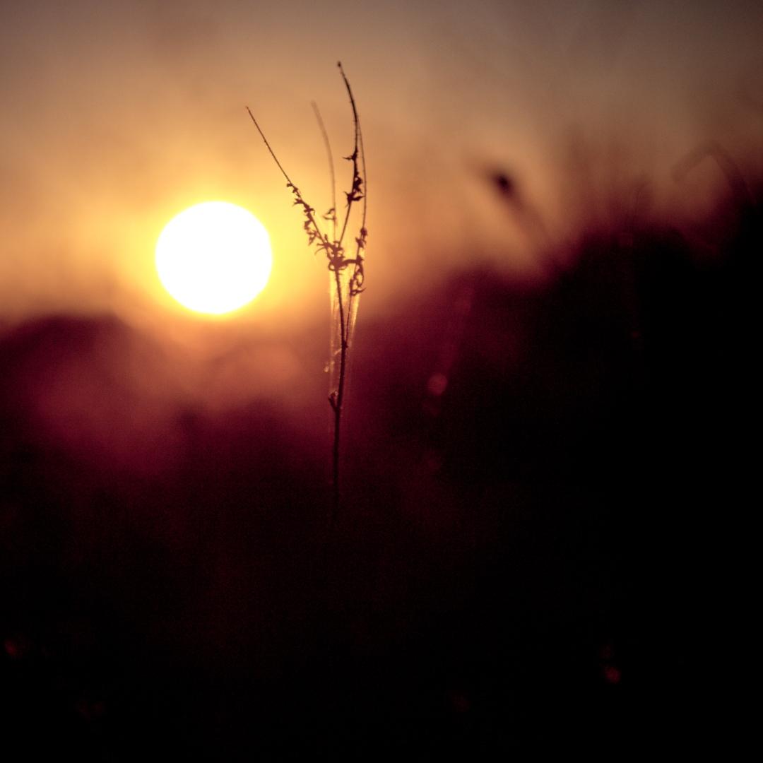 Solongdaylight-11082013